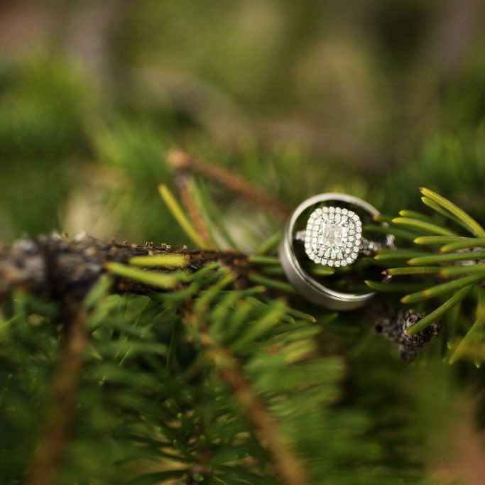 Wedding rings on pine tree branch